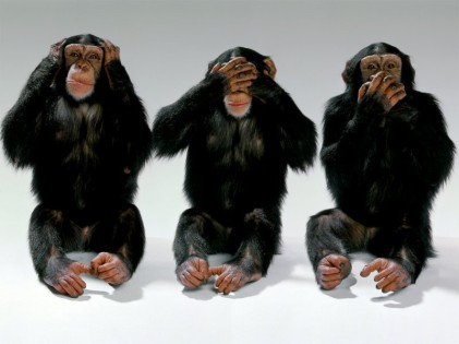 wildlife-monkeys-hear-no-evil-see-no-evil-speak-no-evil1
