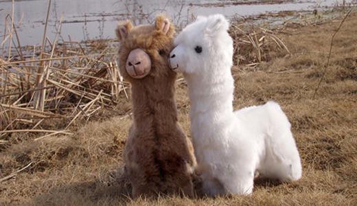alpaca teddy