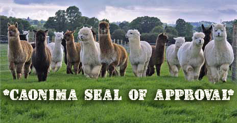 alpacroup copy
