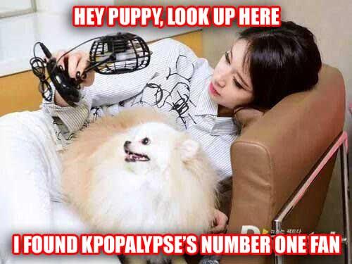 dogfan copy